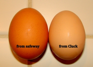 side-by-side-eggs